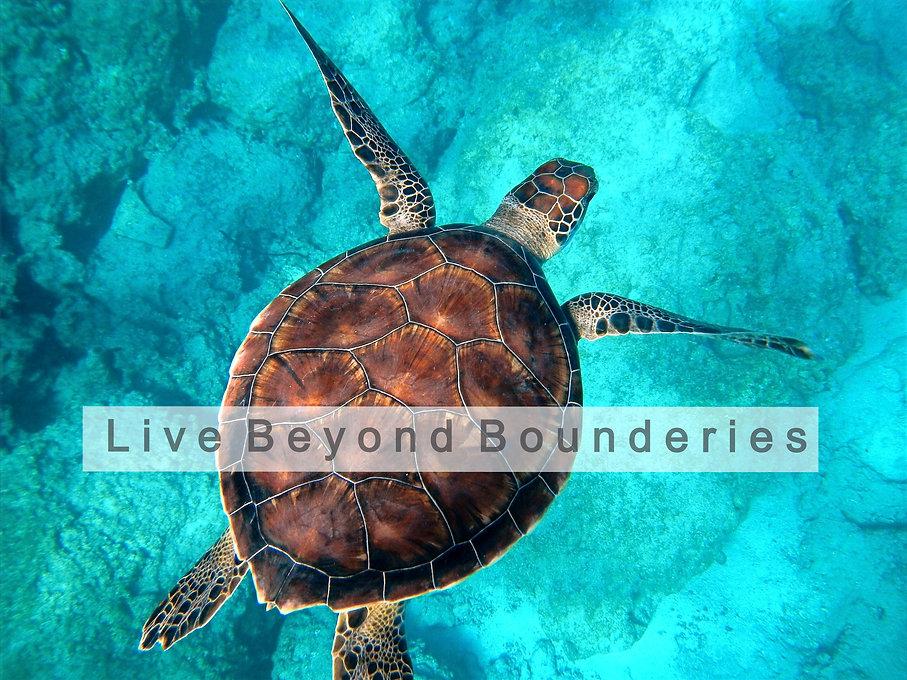 Sea%20turtle%20swimming_edited.jpg