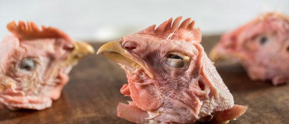 Raw Chicken Heads