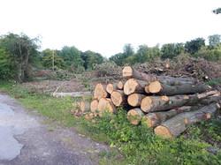 Deforestation Aout 2020