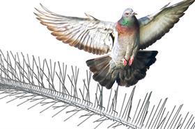 Taubenschutzspikes