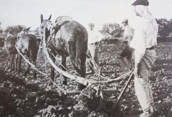 Hombres trabajando con burros.jpg
