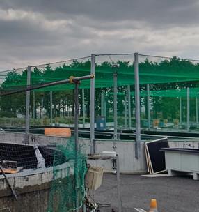 「神奈川県内水面種苗生産施設」、「厚木あゆ種苗センター」を視察しました
