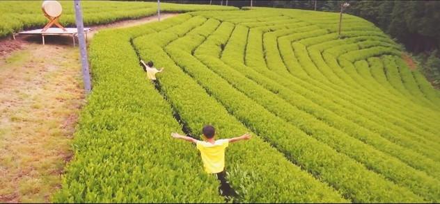 茶畑-04.jpg