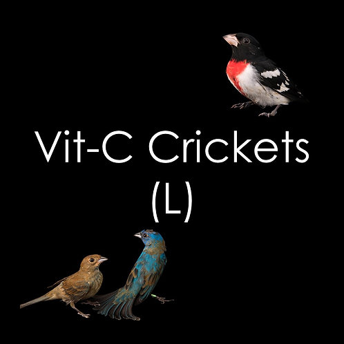 Crickets - 500g