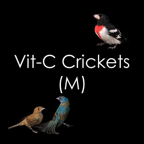 Crickets - 250g