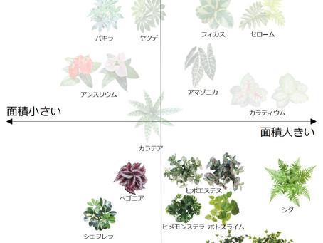 植栽の選び方