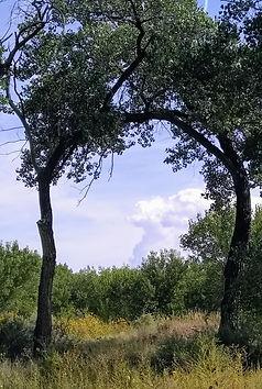 Bosque arch.jpg
