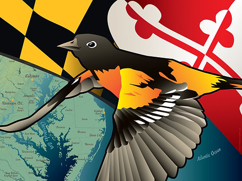 Maryland Oriole Art Print