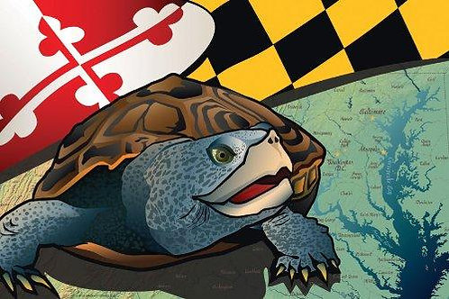 Maryland Terrapin Art Print ~ Citizen Pride