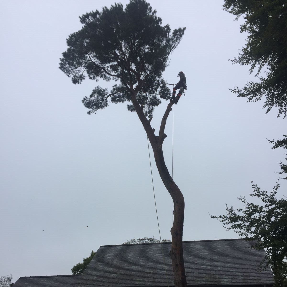 Tree Services in Betws y Coed
