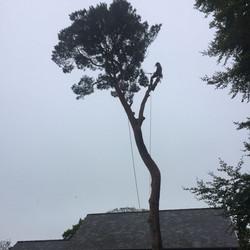 Tree Services in Betws y Coed