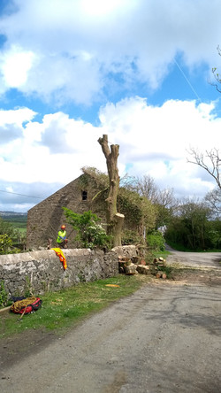 Tree Services in Llanberis