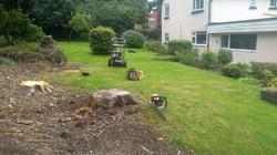 Stump Grinding in Bangor