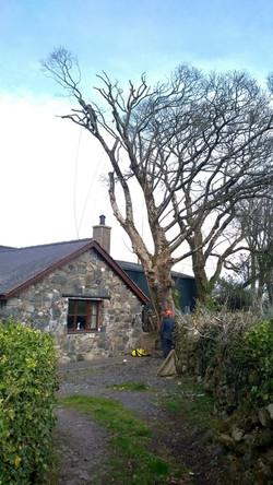 Tree Surgeon Services in Llanrug