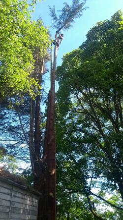Tree Surgeon Services in Penmaenmawr