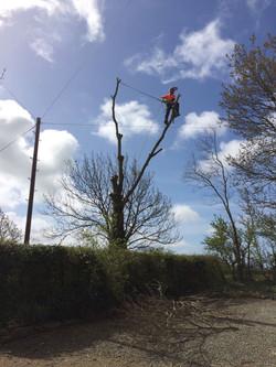 Tree Services in Llanrwst