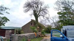 Tree Removal in Llanberis