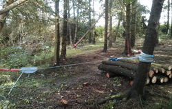 Forestry Services in North Wales