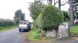 Hedge Cutting Services in Caernarfon