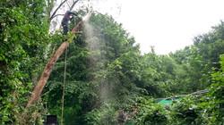 Tree Surgeons near Llandudno