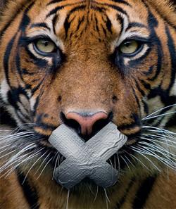 DanielleBrandtDesign_WWF_TIGER_2