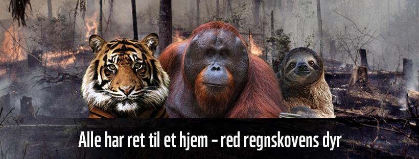 60499_WWF_RegnskovsKampagne_web