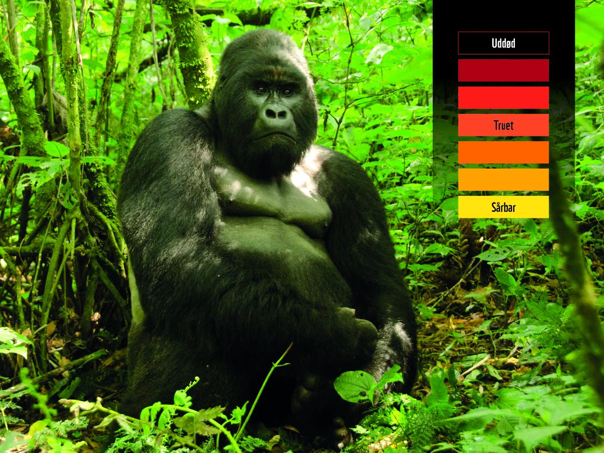 60499_WWF_FB_Updates_gorilla