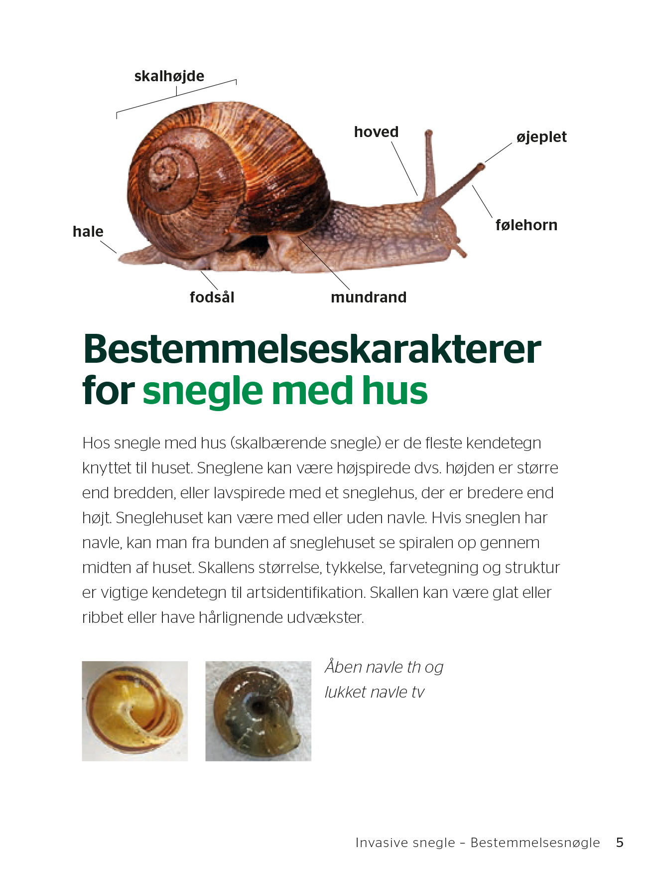 Snegleguide_low-7