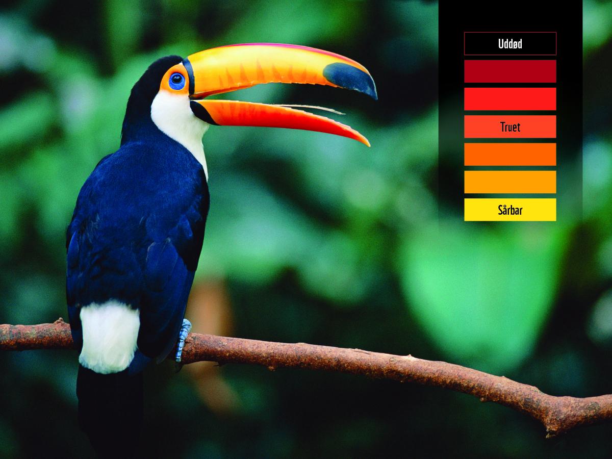 60499_WWF_FB_Updates_tukan