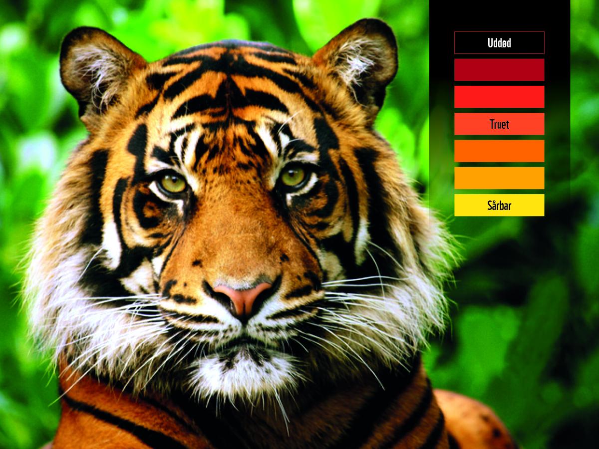 60499_WWF_FB_Updates_tiger