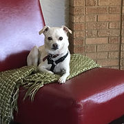 Max at Beth Lewis Therapy Group in Fort Worth, TX