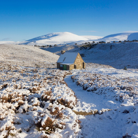 December : Ryvoan, Cairngorms