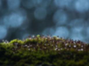 blur-bokeh-close-up-753548.jpg
