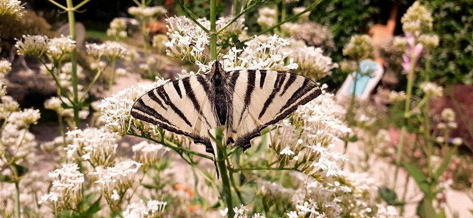 Papillion sur Plante_edited.jpg