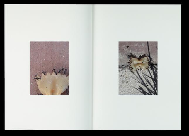 Historias naturais / video book