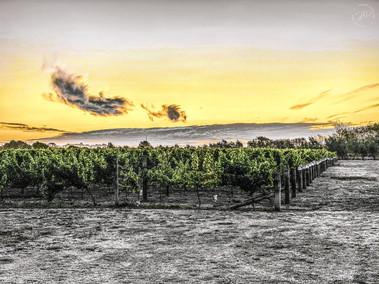 Malborough Winery