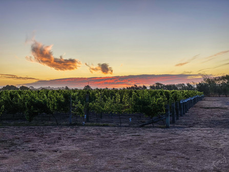 Sunset over Arbour Winery