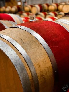 Barrels at Cloudy Bay
