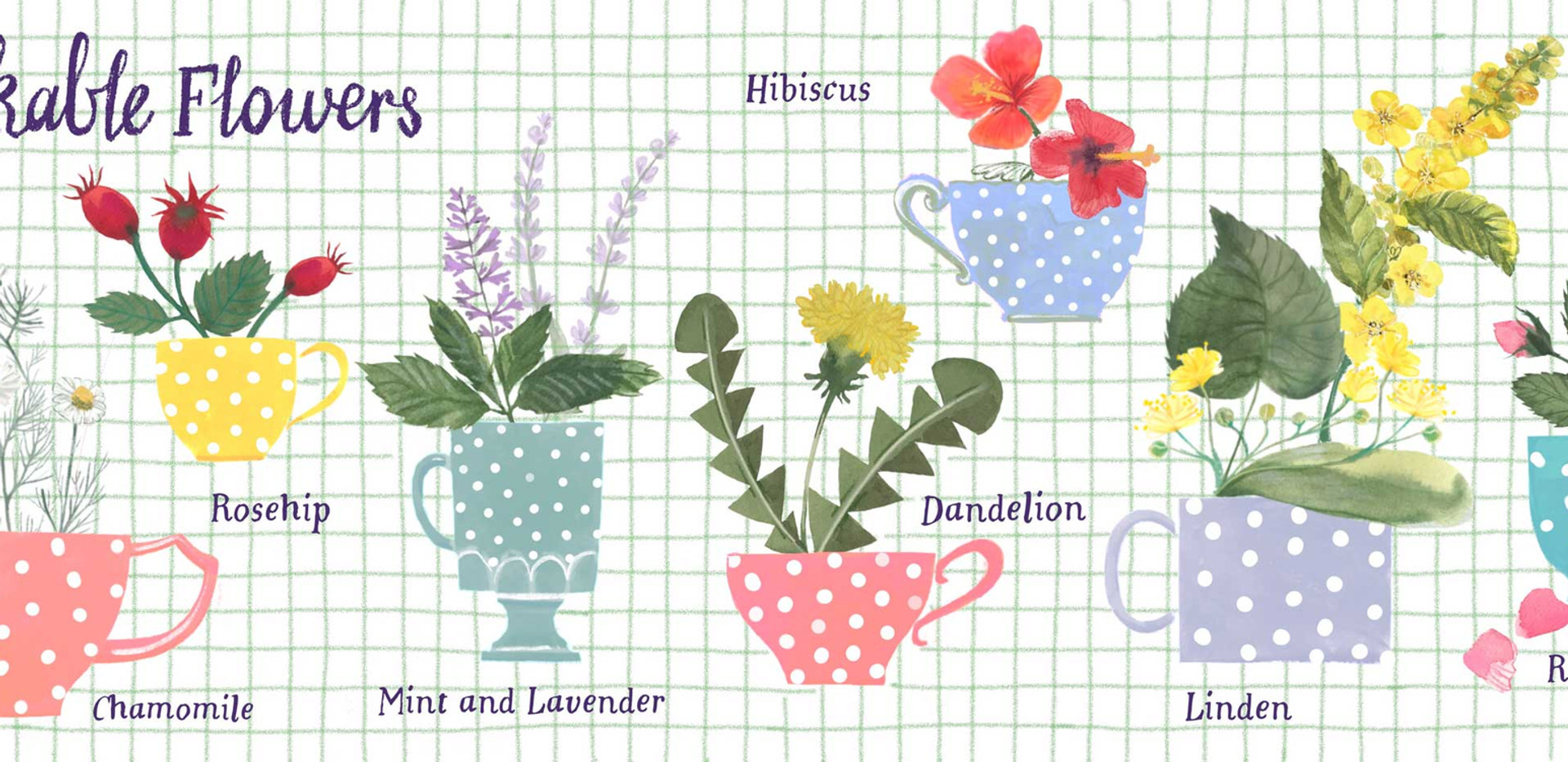 Drinkable flowers double spread illustration for TDAC