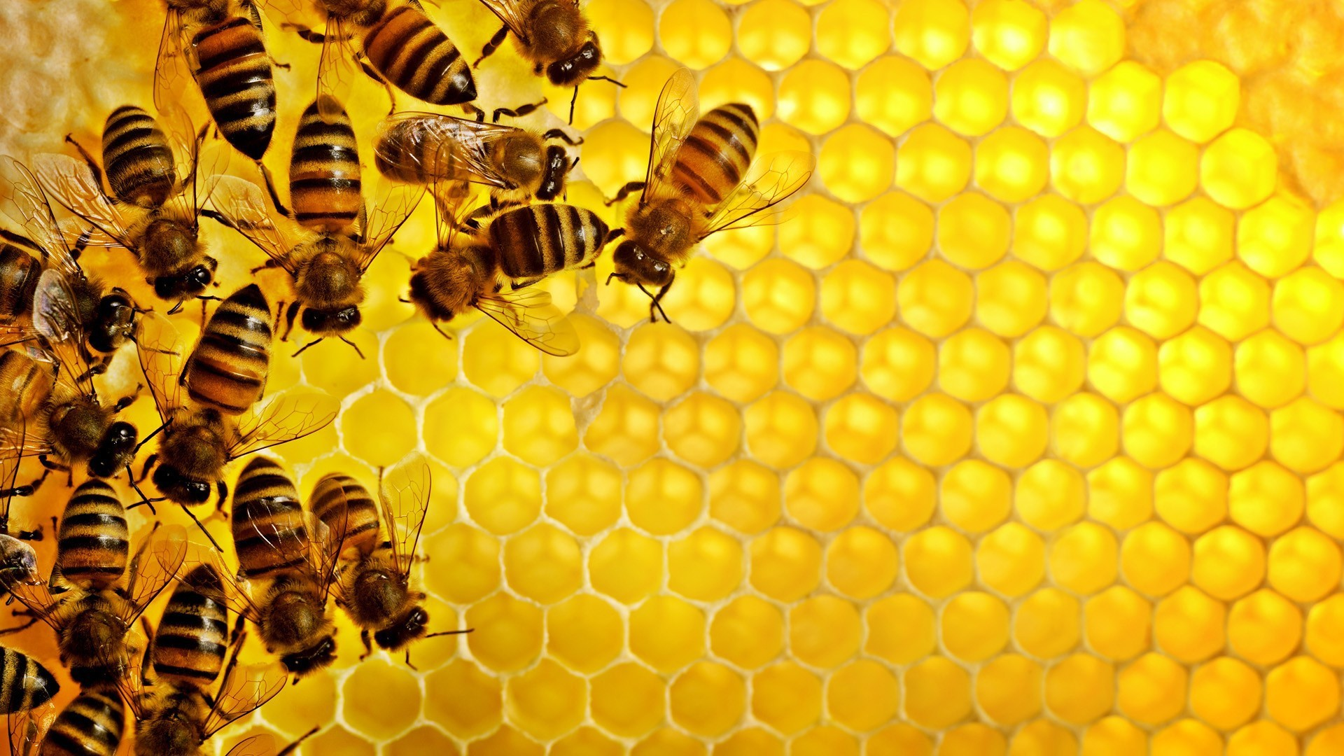 1920x1080-px-bees-geometry-hexagon-hive-
