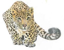 cheetahcopyright.jpg