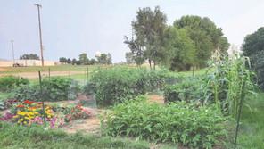 Growing a sense of community through gardening