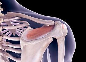 Shoulder Anatomy.JPG