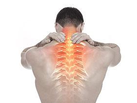 Back Spine.jpg