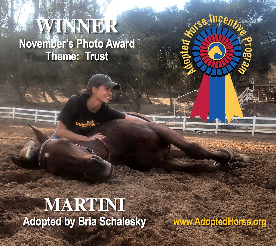 Horse wins photo contest