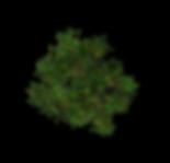 tree_jrl8a.png