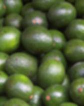 Avocados USDA
