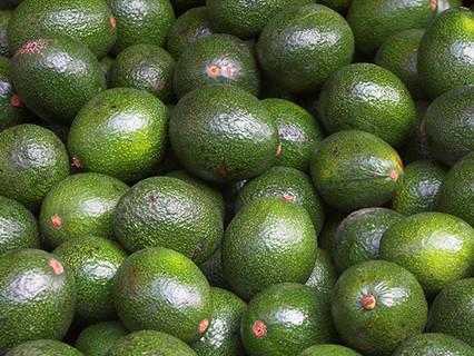 Consumo di avocado e profilo lipidico in soggetti sovrappeso e obesi