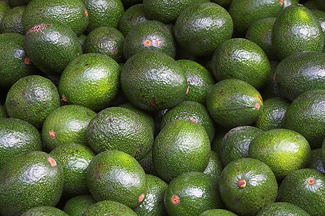 Food Bank Avacados