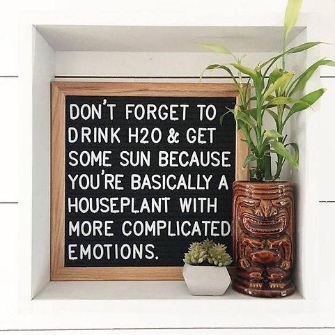 plant with emotins.jpg